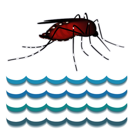 Dengue Fever Mosquito, infectious virus disease, standing water, isolated on white background  Dengue Fever Mosquito, infectious virus disease, standing water, isolated on white background