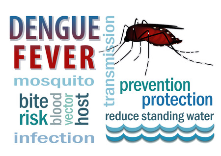 dengue fever: Dengue Fever mosquito, standing water, word cloud, graphic illustration isolated on white background