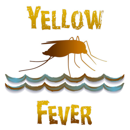 infectious: Yellow Fever mosquito, standing water, graphic illustration isolated on white background   Illustration