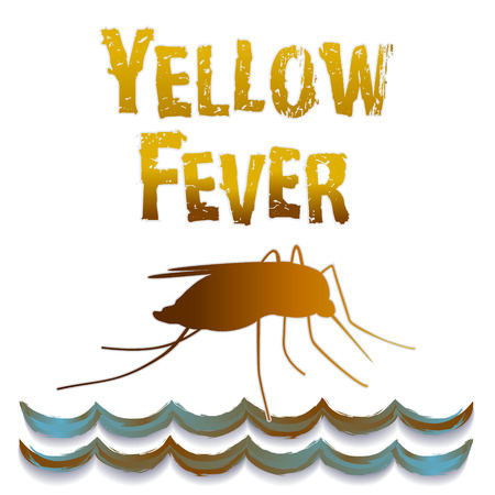 subtropical: Yellow Fever mosquito, standing water, graphic illustration isolated on white background   Illustration