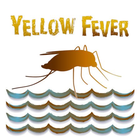 subtropical: Yellow Fever mosquito, standing water, graphic illustration isolated on white background