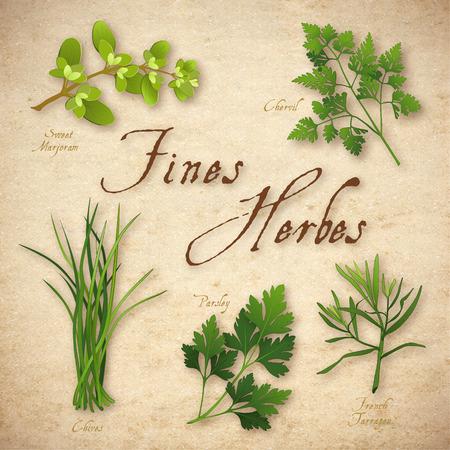 Fines Herbes, klassieke Franse kruid mix voor het koken marjolein, kervel, bieslook, Italiaanse bladpeterselie, Franse dragon op rustieke textuur achtergrond