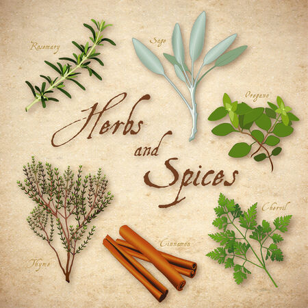Herbs and Spices, Rosemary, Garden Sage, French Chervil, stick Cinnamon, English Thyme, Italian Oregano on rustic texture background