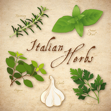 flat leaf: Italian Cooking Herbs, Rosemary, Garlic, Italian Oregano, Sweet Basil and Italian flat leaf Parsley on rustic texture background