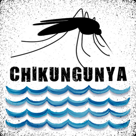infectious disease: Chikungunya, standing water, mosquito, graphic illustration with grunge background. Illustration