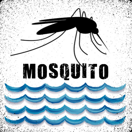 infected mosquito: Mosquito, standing water graphic illustration with grunge background.