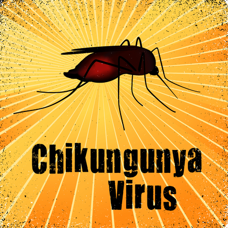 aedes: Chikungunya Virus, mosquito, graphic illustration with gold ray grunge background. Illustration