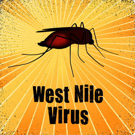 West Nile Virus, mosquito, graphic illustration with gold ray grunge background. Illustration