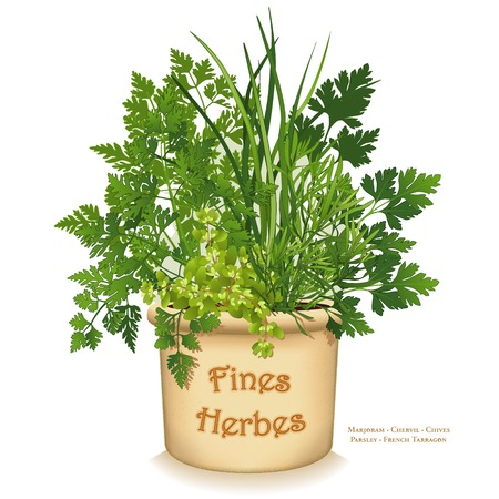 allium: Fines Herbes garden planter, fine herbs for traditional French cooking, left to right: Chervil, French Tarragon, Sweet Marjoram, Chives, Italian Parsley in clay flowerpot crock isolated on white background.