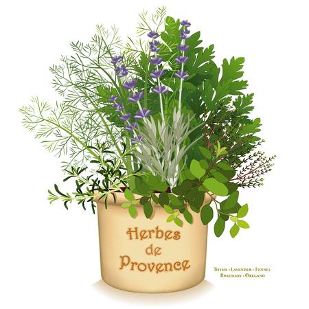 Herbes de Provence planteur de jardin, mélange classique d'herbes aromatiques de cuisine du sud-ouest France, de gauche à droite: le romarin, fenouil doux, italien plat de persil, thym, l'origan, lavande, dans l'argile pot pot isolé sur fond blanc. Vecteurs