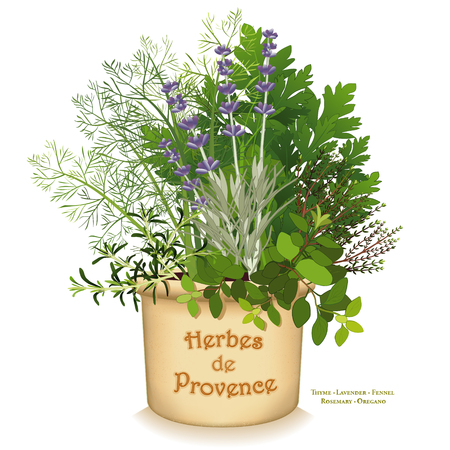 Herbes de Provence garden planter, classic blend of aromatic cooking herbs of southwestern France, left to right: Rosemary, Sweet Fennel, Italian Flat Leaf Parsley, Thyme, Oregano, Lavender, in clay flowerpot crock isolated on white background. Stock Illustratie