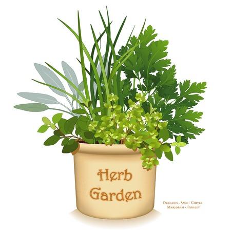 チャイブ: Herb Garden Planter, gourmet cooking herbs in clay flowerpot crock, left to right: Italian Oregano, Sage, Chives, Flat Leaf Parsley, Sweet Marjoram, isolated on white background.