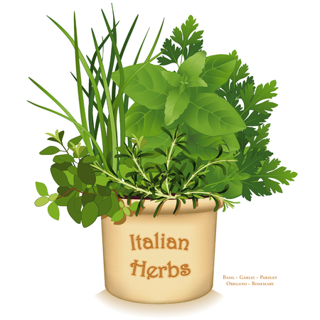 Italian Herb Garden, traditional flavors for Mediterranean cuisine, left to right: Oregano, Garlic Chives, Sweet Basil, Flat Leaf Parsley, Rosemary, in clay flowerpot crock, isolated on white background.
