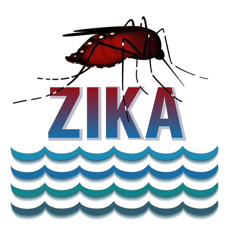 infected: Zika Virus mosquito, standing water, graphic illustration.
