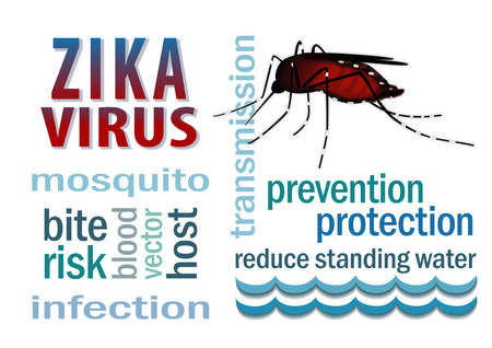 Zika 바이러스 단어 구름 텍스트로 서 물 그래픽 그림 위에 모기.