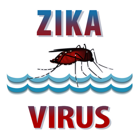infectious disease: Zika Virus mosquito, standing water, graphic illustration.