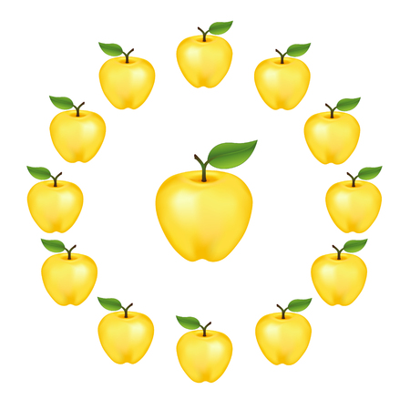 orchard fruit: Apples in a wheel, Golden Delicious, fresh, natural, ripe, orchard garden fruit in a circle, isolated on a white background.
