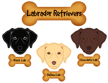 Labrador Retrievers, Black Lab, Chocolate Lab, Yellow Lab, dog bone treats.