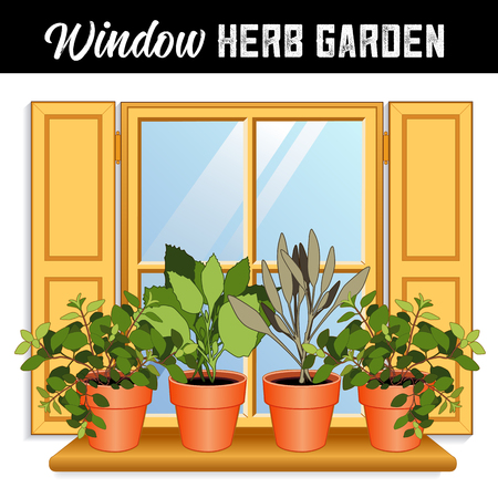 Window Herb Garden with Italian Oregano, Garden Sage, Sweet Basil plants in clay flower pots on a wooden shelf, window pane, gold shutters.
