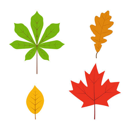 Leaves set in flat style isolated on white background.  イラスト・ベクター素材