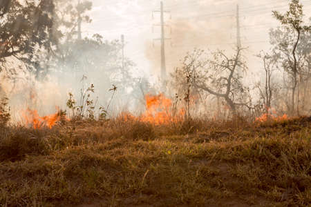 Wild Fires Burning out of control in the City Limits on the Northwest Side of Brasilia know as Granje do Torto Archivio Fotografico