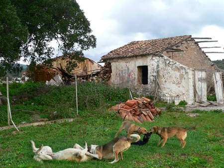 stray: wild dogs playing in front of abandoned ruins of a house in the countryside in greece