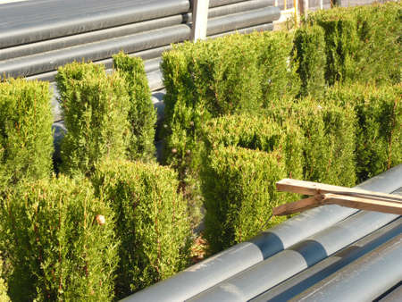 carefully: green trees sandwitched between two carefully placed stacks of plastic pipes, in the middle of an engineering project Stock Photo