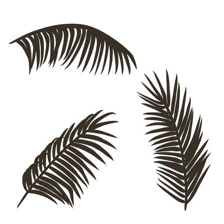 Ensemble de branches de palmier de surf d'été sous différents angles