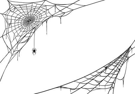 Spider web for cards and background for Halloween Vector Illustratie