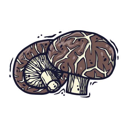 Vector shiitake mushroom for vegan food cooking