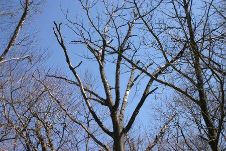limbs: Tree Limbs