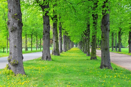 Lane of green trees in a city park in the spring Stock Photo