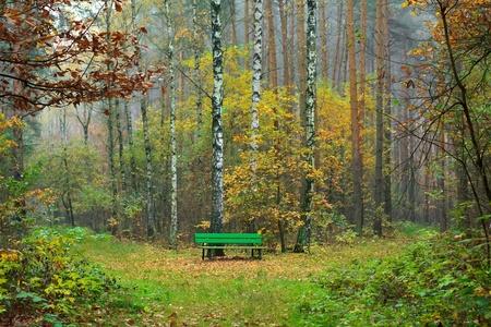 cruce de caminos: Un banco en el bosque de otoño