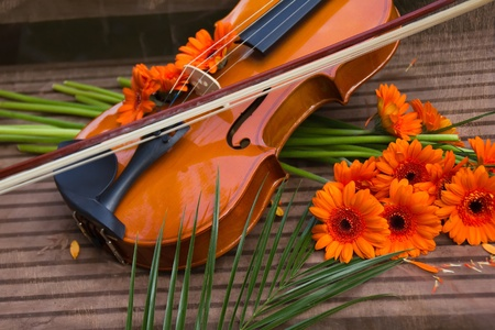 Violin and flowers on the stair Stock Photo