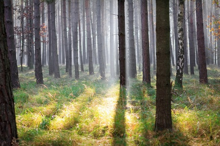 Forest with sunlight through the trees in Germany photo