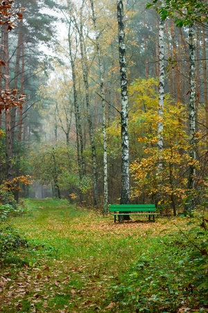 A bench in the autumn forest