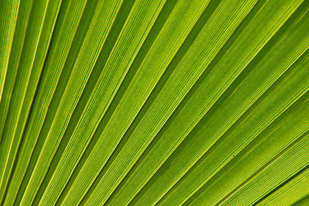 Beautiful detail of the palm leaf photo