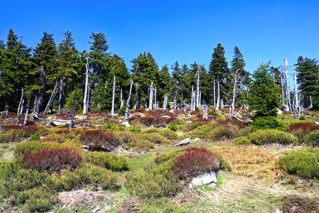 brocken: Forest on the mountain Brocken Stock Photo