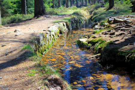 Stream in the forest in national park Harz photo