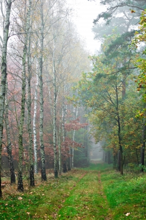 An autumnal woodland misty path photo