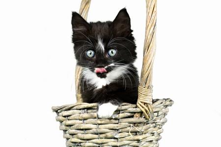 Little black-white kitten isolated sitting in basket Stock Photo