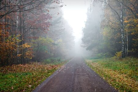 A mysterious path cloaked in dense early morning fog and surrounded by trees photo