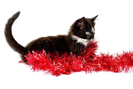 Black-white kitten playing with Christmas garland
