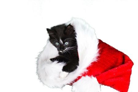 Little black-white kitten in a christmas hat