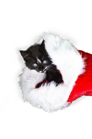 A kitten hides in a santa claus hat on a white background Stock Photo