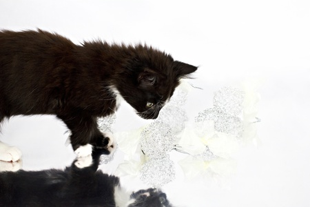 Black-white kitten playing with Christmas decorations photo