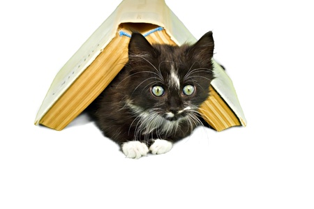 Black-white kitten peering out from underneath book Stock Photo