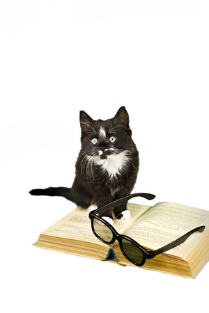 Black-white kitten is sitting on the book