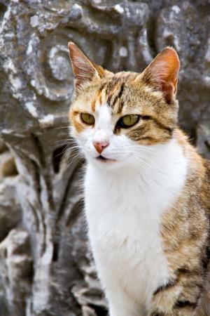 colonade: A cat on the colonade of ancient city Ephesus, Turkey