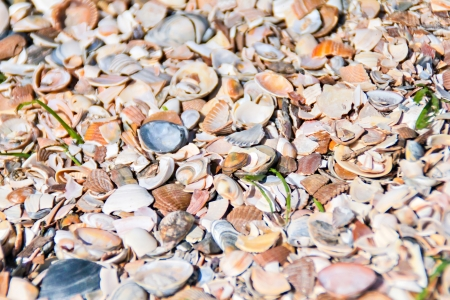 Shell seamless - background of a beach covered by shells photo
